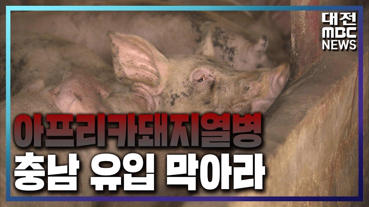 [리포트]아프리카돼지열병 유입 막아라