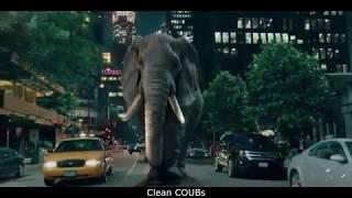 Прикольные видео | COUBs funny videos #24