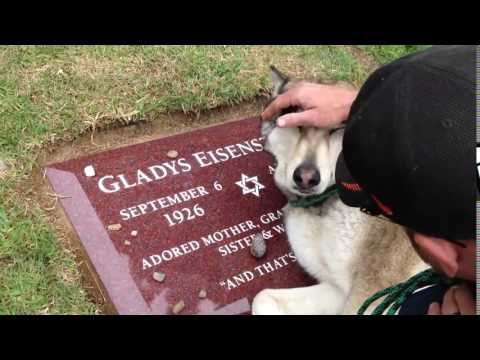 Commovente video di un Cane che piange sulla tomba del suo padrone deceduto