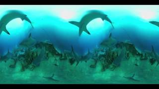 VR MythBusters  Sharks ! 360 Video