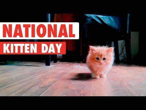 סרטון של חתלתולים חמודים