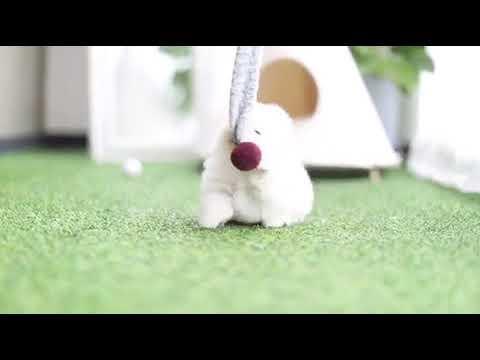 Candie Micro White Pomeranian