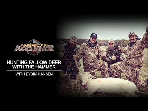 American Airgunner | Hunting Fallow Deer With The Hammer