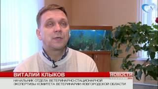 Областная ветеринарная служба получила награды на всероссийской агропромышленной выставке «Золотая осень»