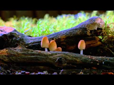 A Beautiful Time Lapse of Mushrooms Growing