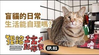 【盲貓的日常生活能自理嗎?】狸銘出宮到你家EP.1 志銘與狸貓