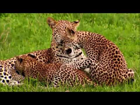 Why Sanctuary Lodges in Botswana Are The Best Option?