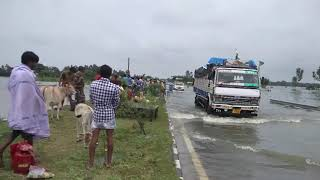 Flood At Itahar Uttar Dinajpur(2)