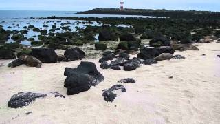 preview picture of video 'Colony of Sleepy Sea Lions'