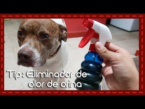 Tip: Eliminador de olor de orina para perro o gato