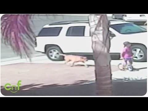Hero Cat Saves Toddler From Dog Attack