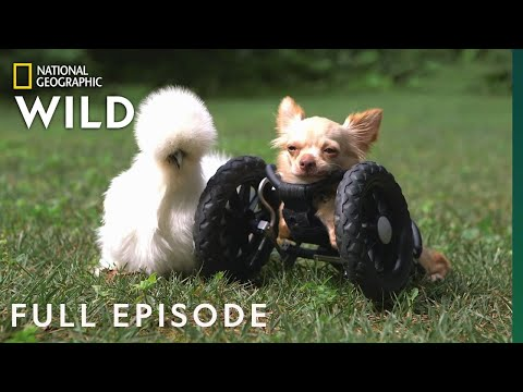 Animal Friend Video Compilation