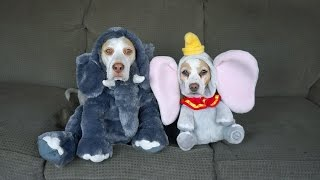 17 Dog Costumes For Halloween: Funny Dogs Maymo & Penny