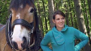 Holzrücken Mit Pferden   Zukunft Für Den Wald
