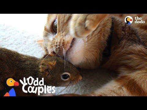 Kipsu ja orave kamerukset