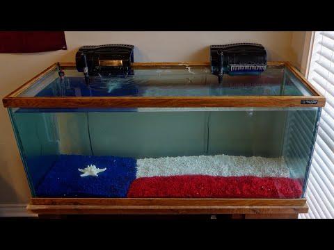 My Texas Fish Tank!