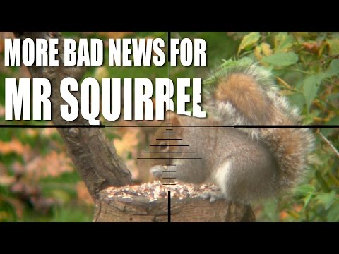 More bad news for Mr Squirrel