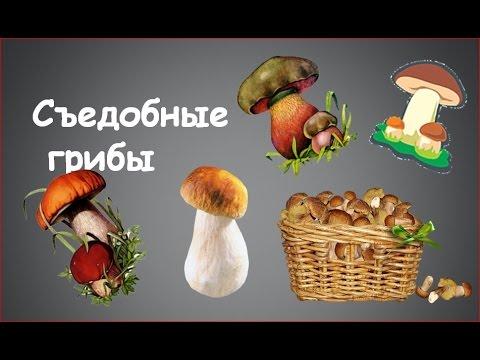 Какие грибы съедобные. Фотографии и названия
