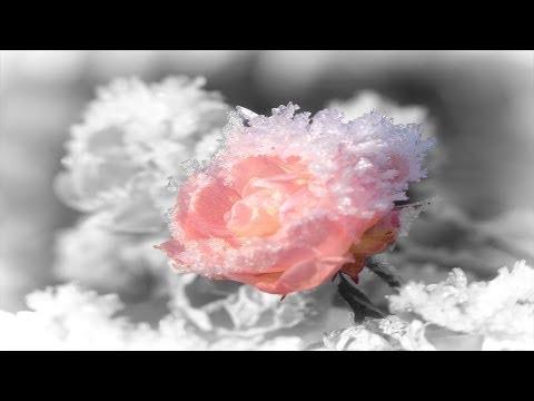 Песня валентина рязанова бабье счастье