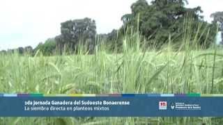 preview picture of video 'Ganadería: la SD en planteos mixtos'