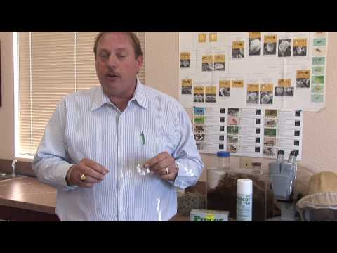Flea Control : Using Borax To Kill Fleas Mp3