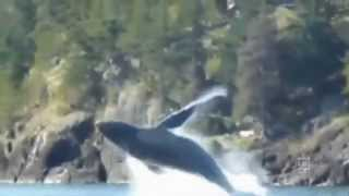 Sea Animals: 10 Awesome jumps out of the water -  Sea animal jumps