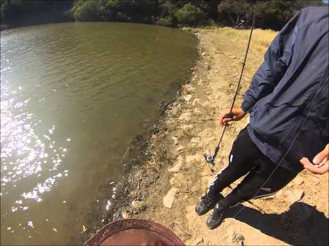 Small pond carp fishing