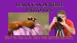Using Live View To Focus Your Canon Rebel T3i - Macro Photography