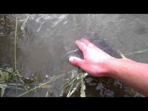 Отпускаю линьков в свой пруд
