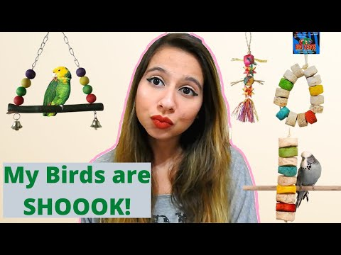 HUGE ASF BIRD TOY HAUL | Shreddable Parrot Toy Haul | Lovebird Toys