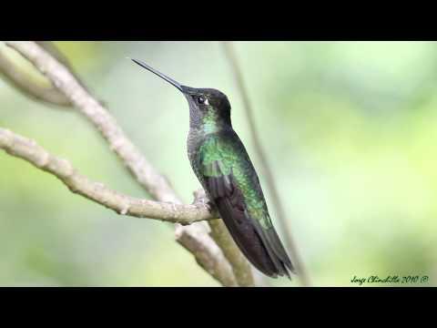 Un macho de colores muy lindos!!!!