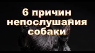 6 причин непослушание Вашей собаки