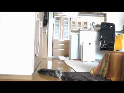 Chú mèo bắt gôn đỉnh như Casillas