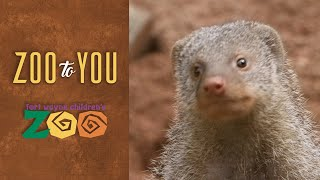 Fort Wayne Children's Zoo: The Life of a Mongoose