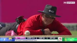 Дикие пчелы сорвали чемпионат по крикету