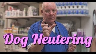 Should You Neuter Your Dog - Ask the Expert | Dr David Randall