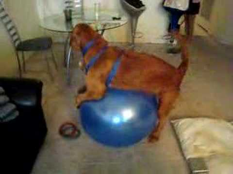 Charlie The Dog Humps The Fitness Ball