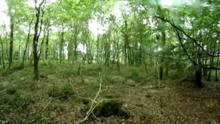 Forest 360 VR