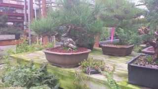 My Local Bonsai Nursery
