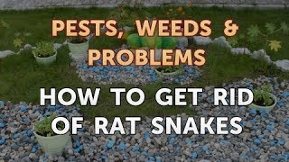 How to Get Rid of Rat Snakes