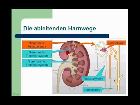 Hypertonie Risiko bei LVH