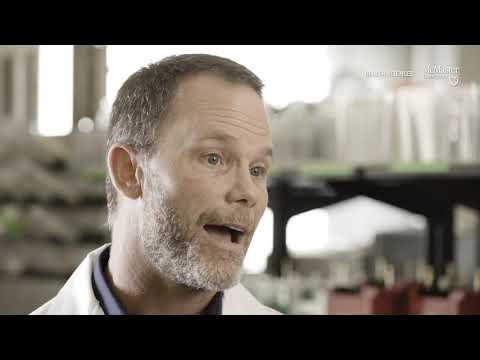 Decât să trateze umflarea de la varicoză