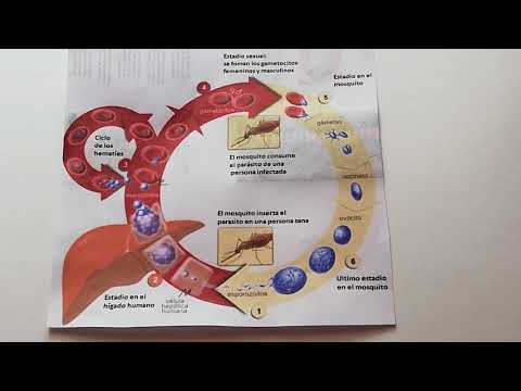 Rectal cancer non surgical treatment