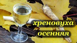 Хреновуха Осенняя