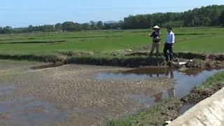 Thừa Thiên - Huế: Nông dân trồng lúa gặp khó khăn ngay từ đầu vụ mùa
