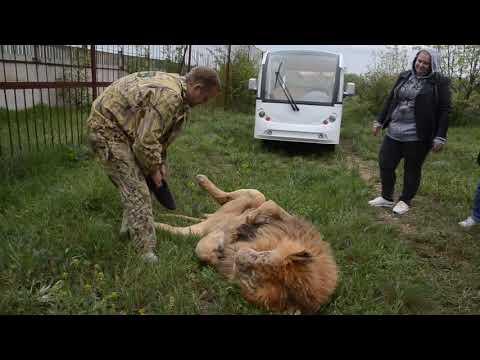 Обнимашки со львом вожаком !!!