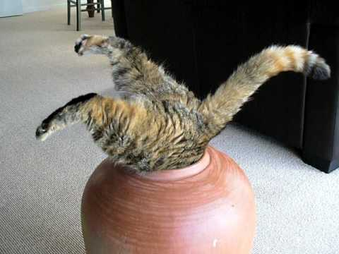 Puppies and Flowers : Fat cat in a pot…