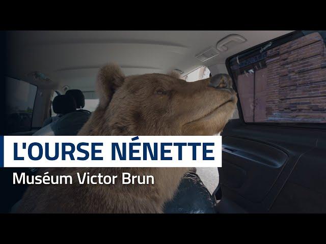 L'ourse Nénette