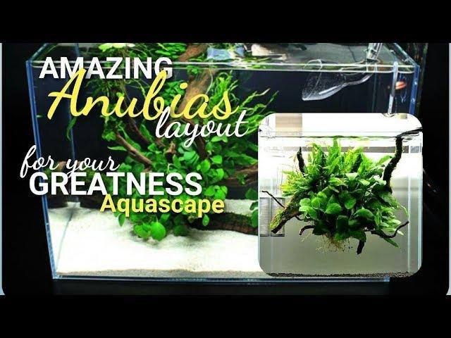 Amazing Anubias Aquascape Layout