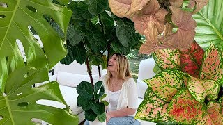 Giant House Plants:  When Little Plants Get Big!